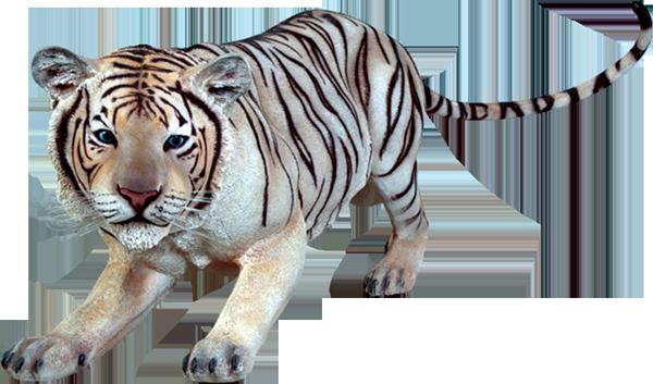 Tiger Siberian Crouching White | Natureworks