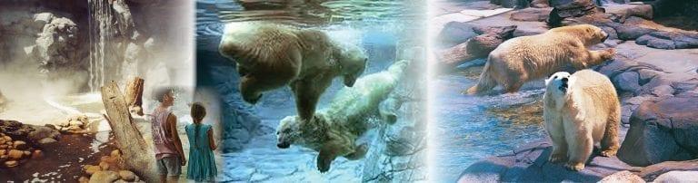 Polar Bear Shores – Gold Coast
