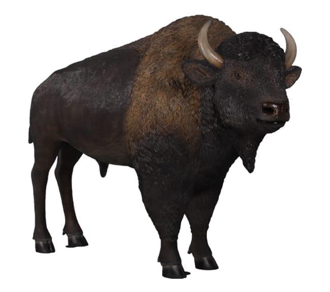 American Bison Sculpture