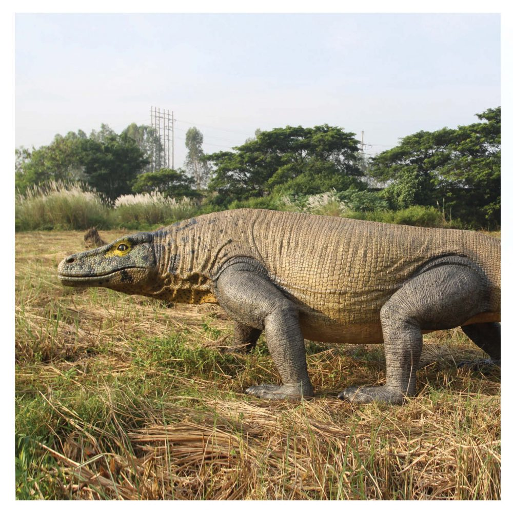 Animals Reptiles Lizards  Megalania Komodo Dragon finish in playground Product Image V px px