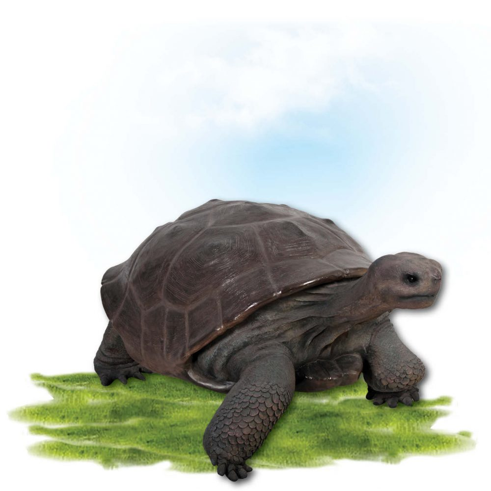Animals Reptiles Tortoise Galapgos Bronze Product Image V px px