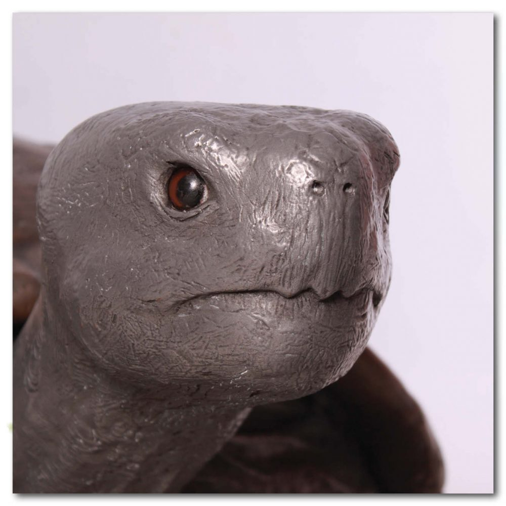 Animals Reptiles Tortoise Galapogos Bronze Aluminium Product Image V px px
