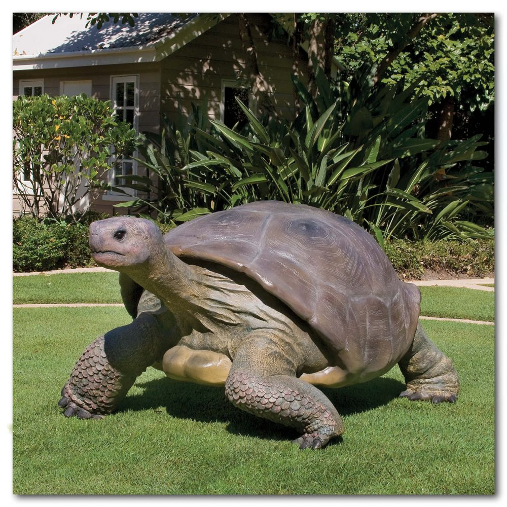 Animals Reptiles Tortoise Galapogos Natural Product Image V px px