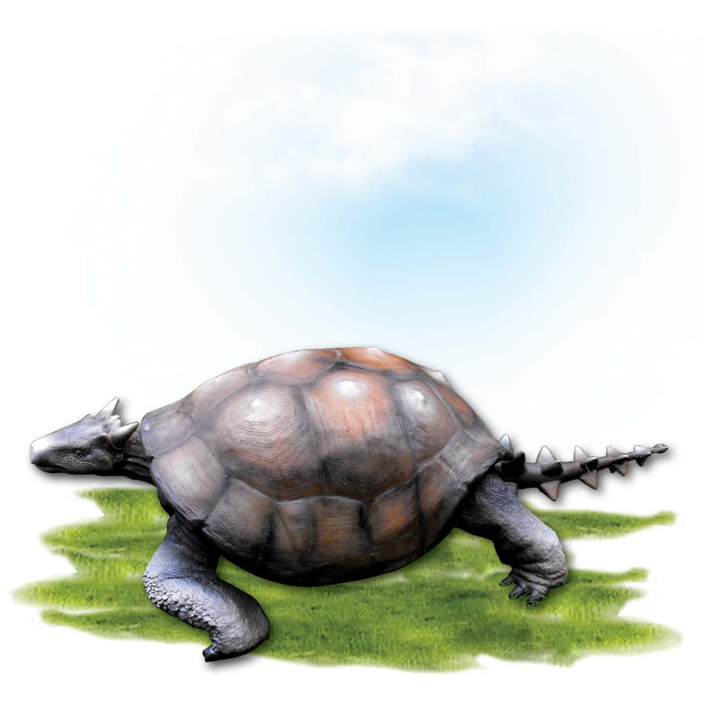 Animals Reptiles Tortoise Meolania Oveni  horned tortoise Product Image V px px