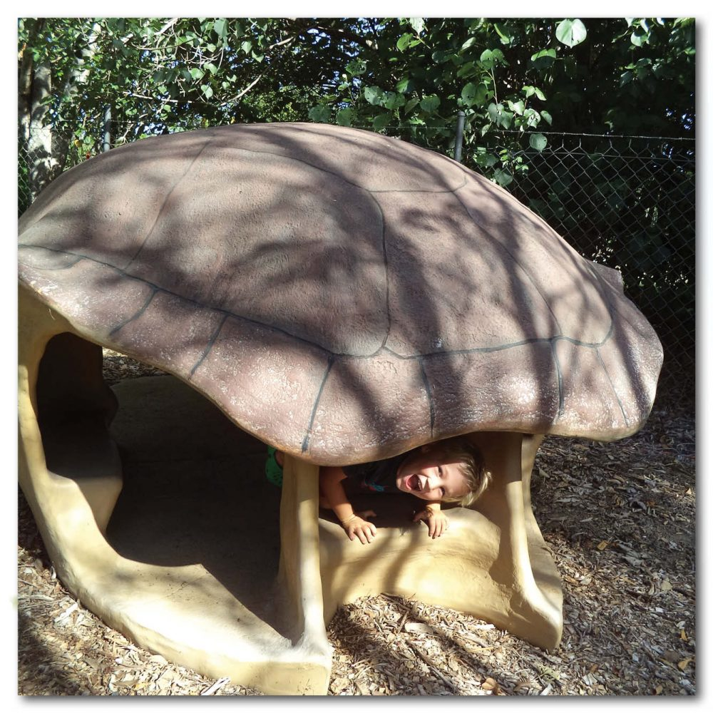 Animals Reptiles Turtles Giant Yurtle the turle shell diorama Product Image V px px