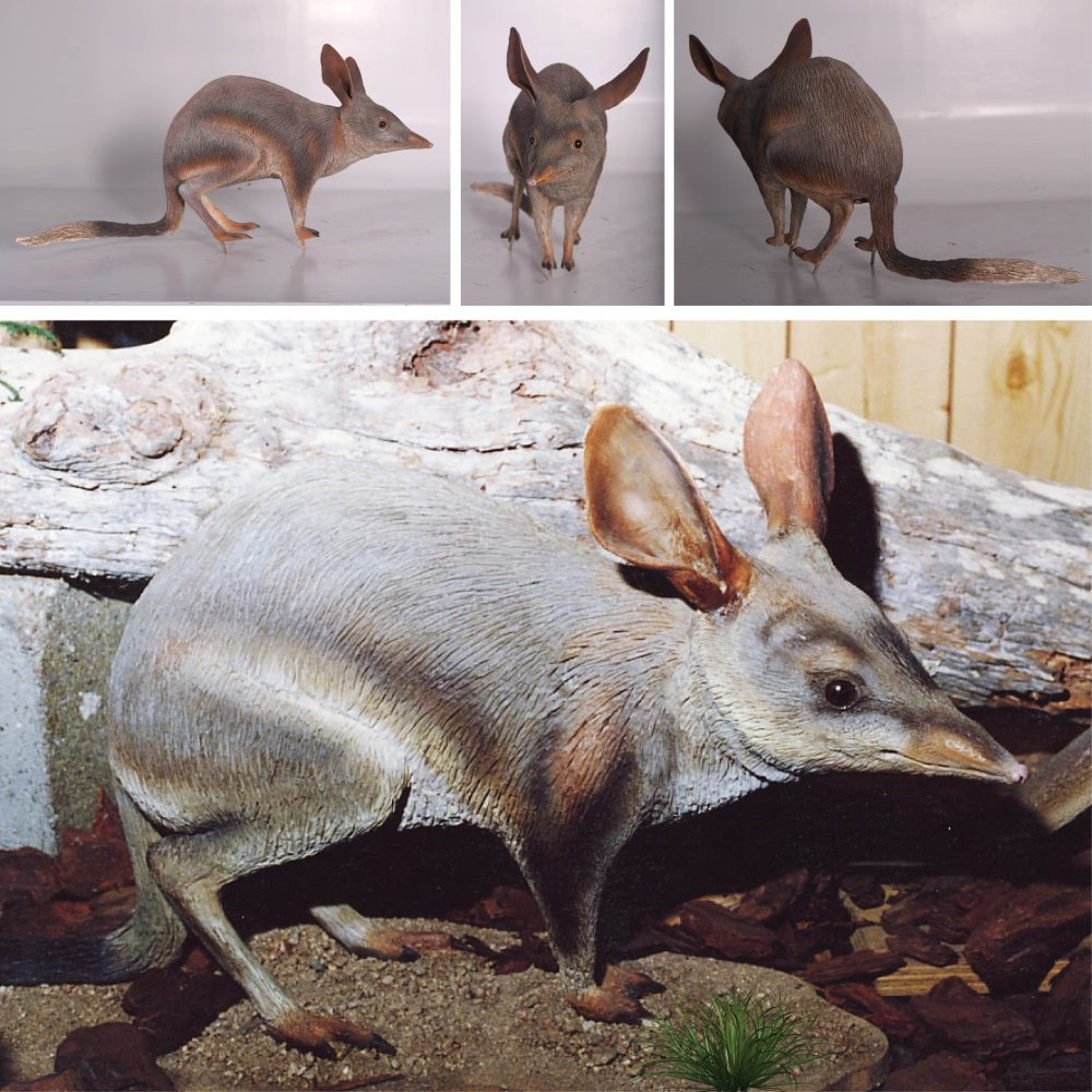 Bilby standing - life-size
