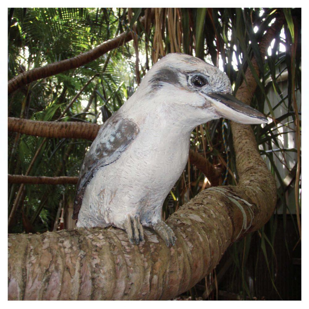 Birds Of Prey Kookaburra on tree branch Product Image  V px px