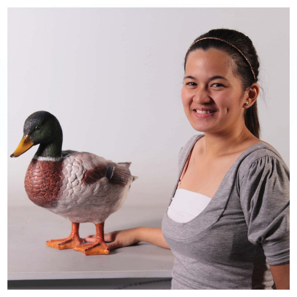 Birds Water Birds Duck Mallard Male  with girl Product Image  V px px