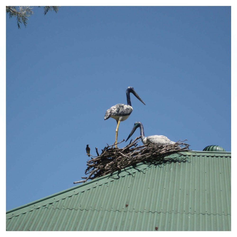 Jabiru - Standing Statue - outside in nest on roof top