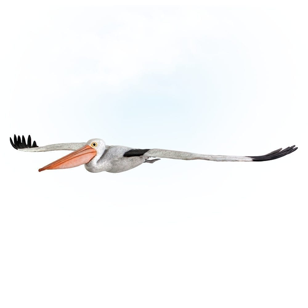 Pelican Bird Flying- Lifesize