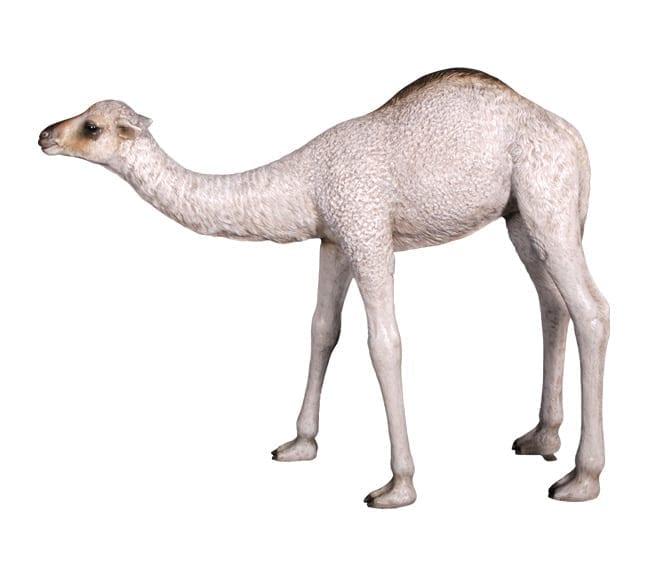Camel Calf Statue Nativity Prop