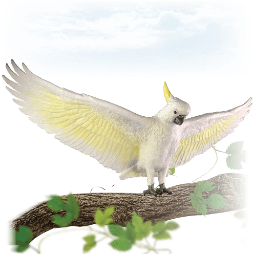 Cockatoo m on tree branch