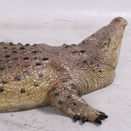Crocodile ft rear head view