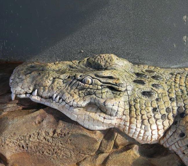 Crocodile Finish Mungerie House Playground