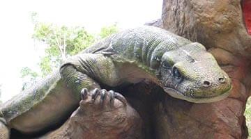 Currumbin Sanctuary Komodo Dragon Goanna