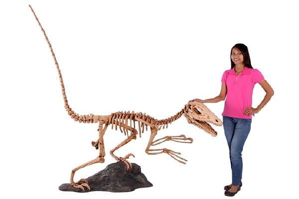 Deinonychus Dinosaur Skeleton Statue