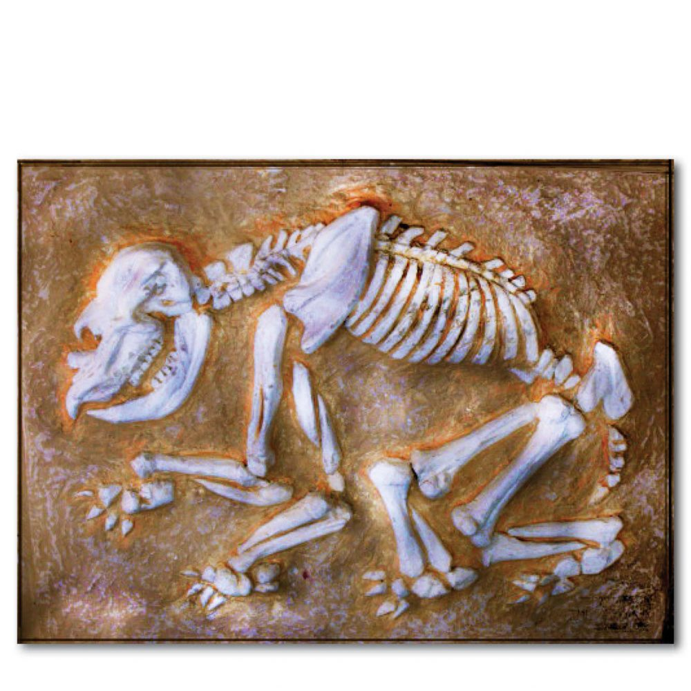 Diprotodon juvenile fossil Dig without sides Product Image  px px