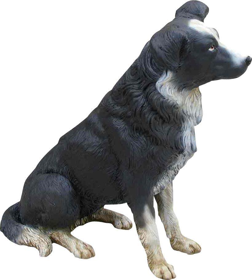 Dog Border Collie Sitting
