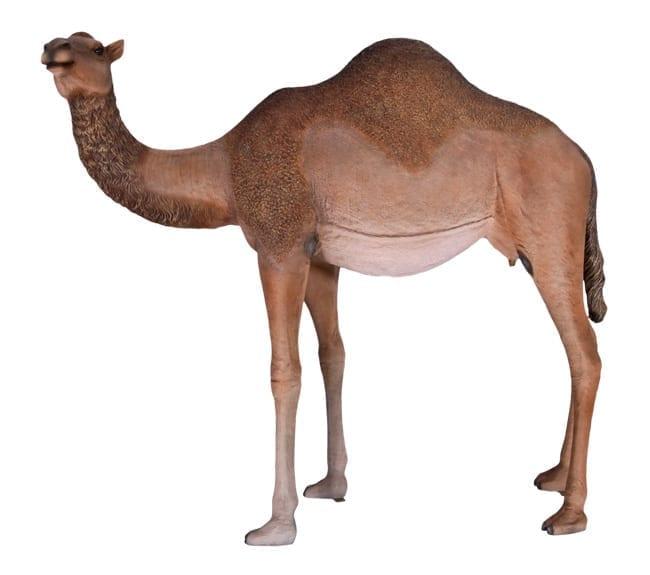 Dromedary Camel Sculptuer