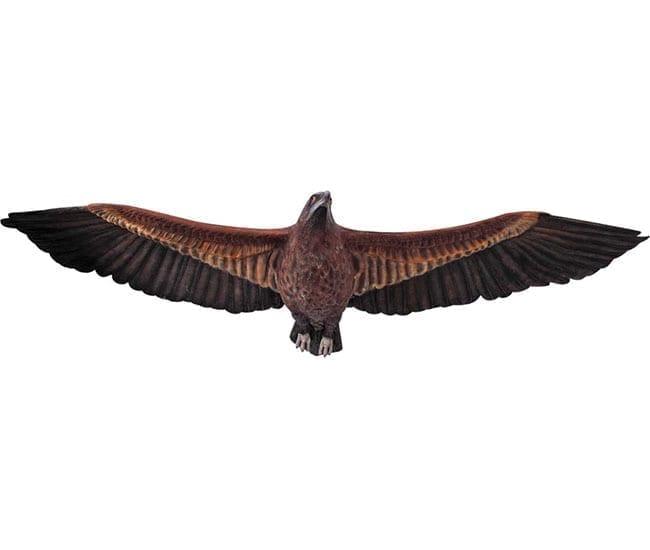 Eagle Wedged Tailed Flying  V
