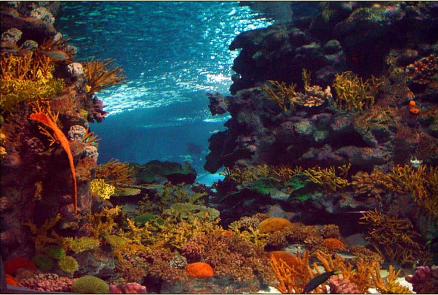 Title Oceanarium - Entire Themed Fit-out