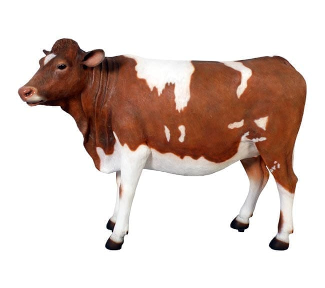 Fibreglass Cow Guernsey Statue