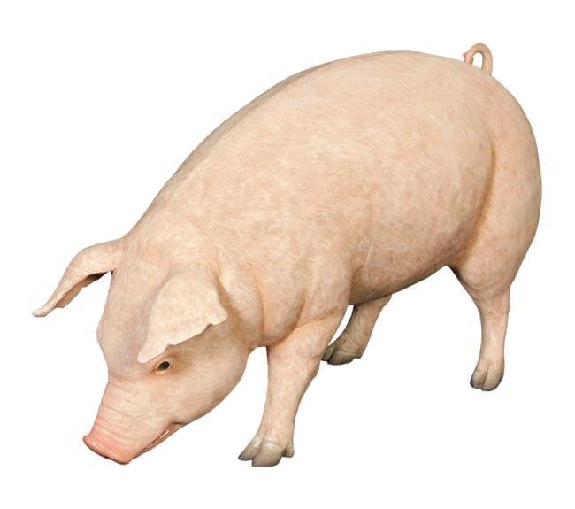 Fibreglass Farm Animal Replica Fat Pig Statue