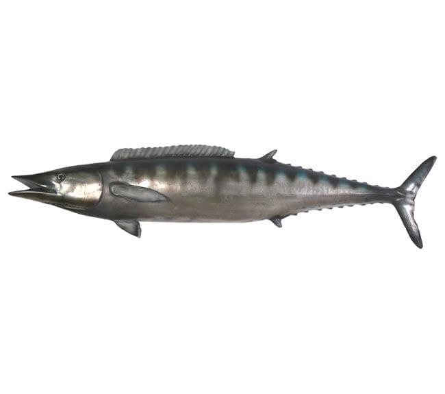Fibreglass FishWahoo