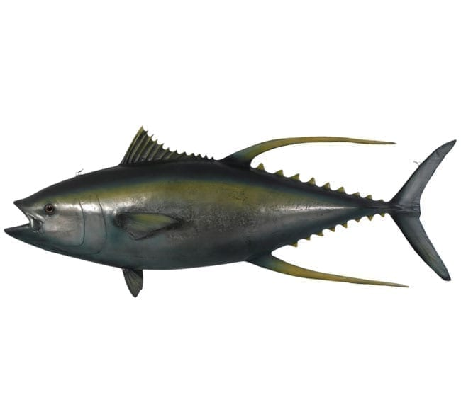 Fibreglass Fish YellowFin Tuna Replica