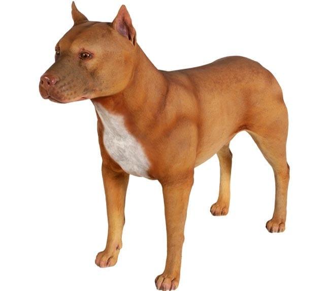 Fibreglass Pit Bull Dog Statue