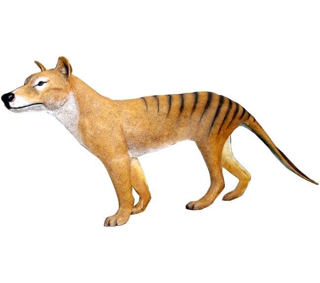 Fibreglass Tasmanian Tiger Free Standing