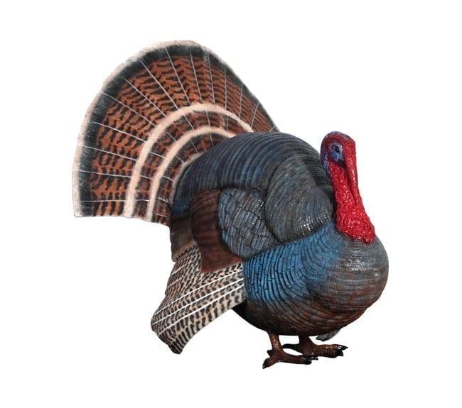 Fibreglass Wild Turkey Sculpture Gobbler