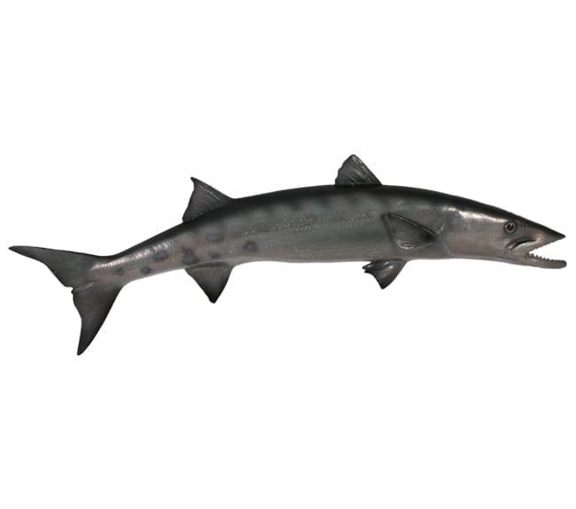Fibreglass fish Barracuda