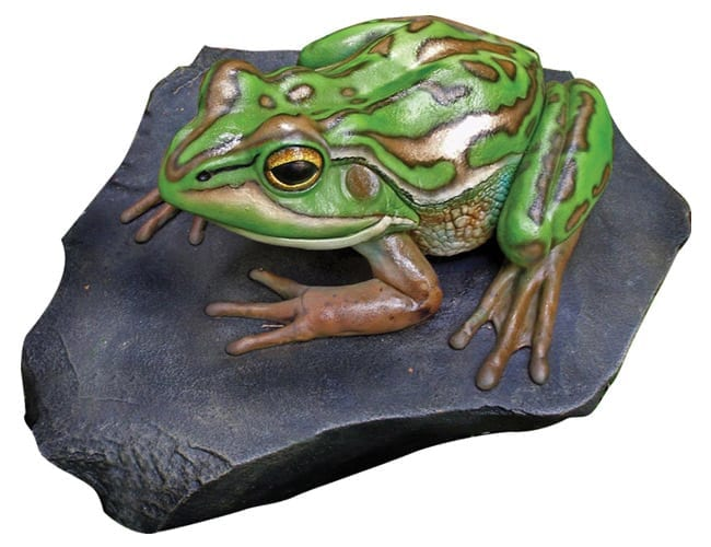 Frog Green Gold Bell on Rock