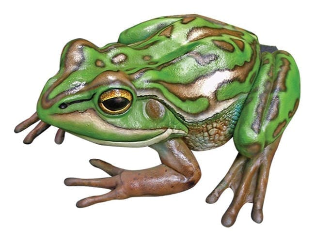 Frog Green Golden Bell Frog Small