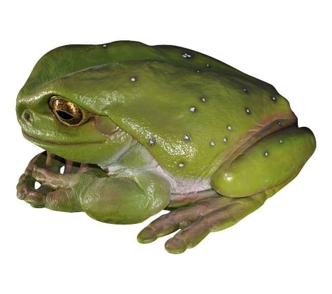 Frog Green Tree Giant