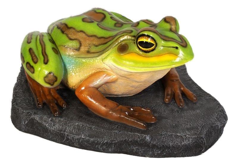 Frog Green  Golden Bell Frog On Rock Giant B