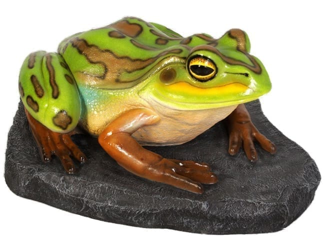 Frog Green and Golden Bell Frog On Rock Giant Heavy Duty B