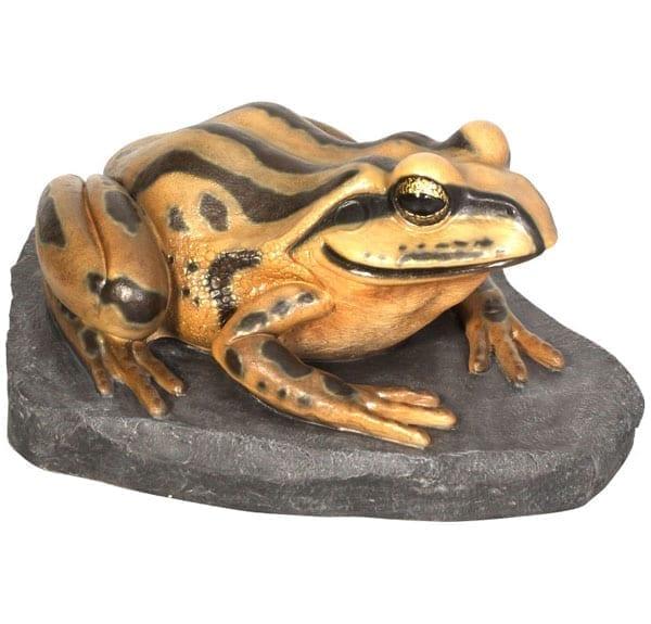 Frog Striped Marsh Frog on Rock Giant