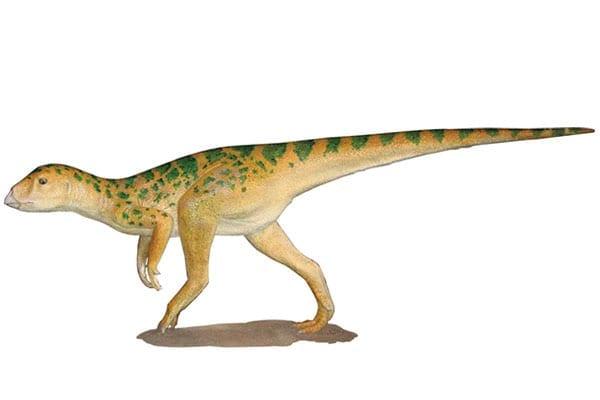 Fulgorethrum Dinosaur