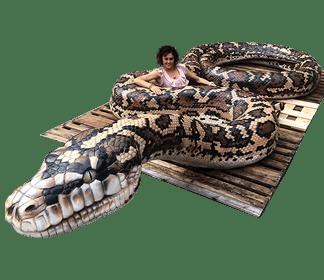 Giant Carpet Python Category image