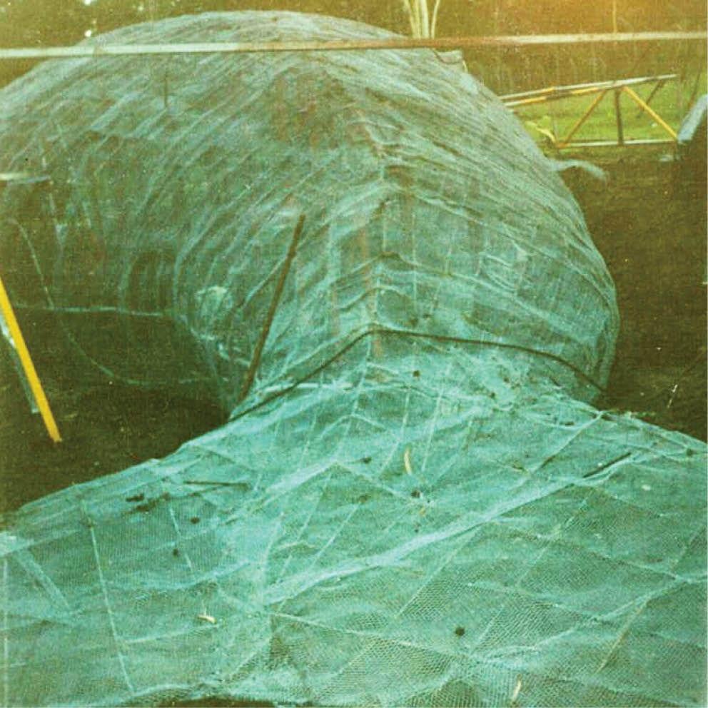 Giant Dugong Rear View Showing fibreglass cover