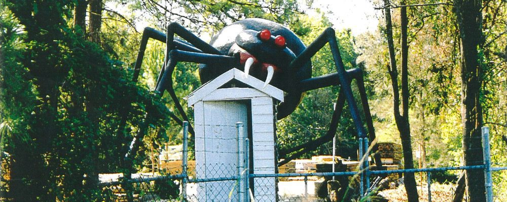 Giant Redback Spider crawling over outback dunny
