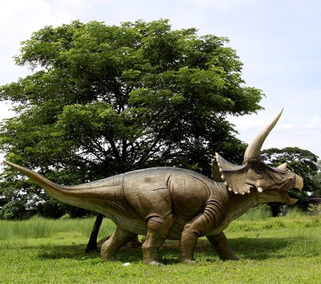 Giant Fibreglass Triceratops Dinosaur Sculpture