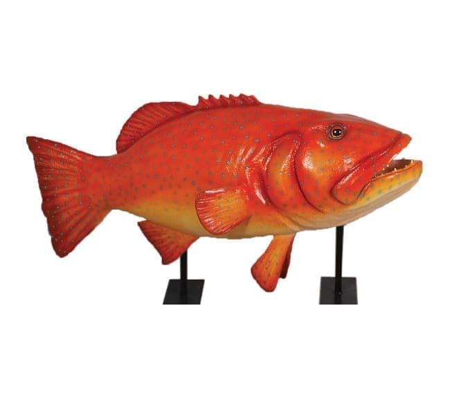 Giant Fish Coral Trout