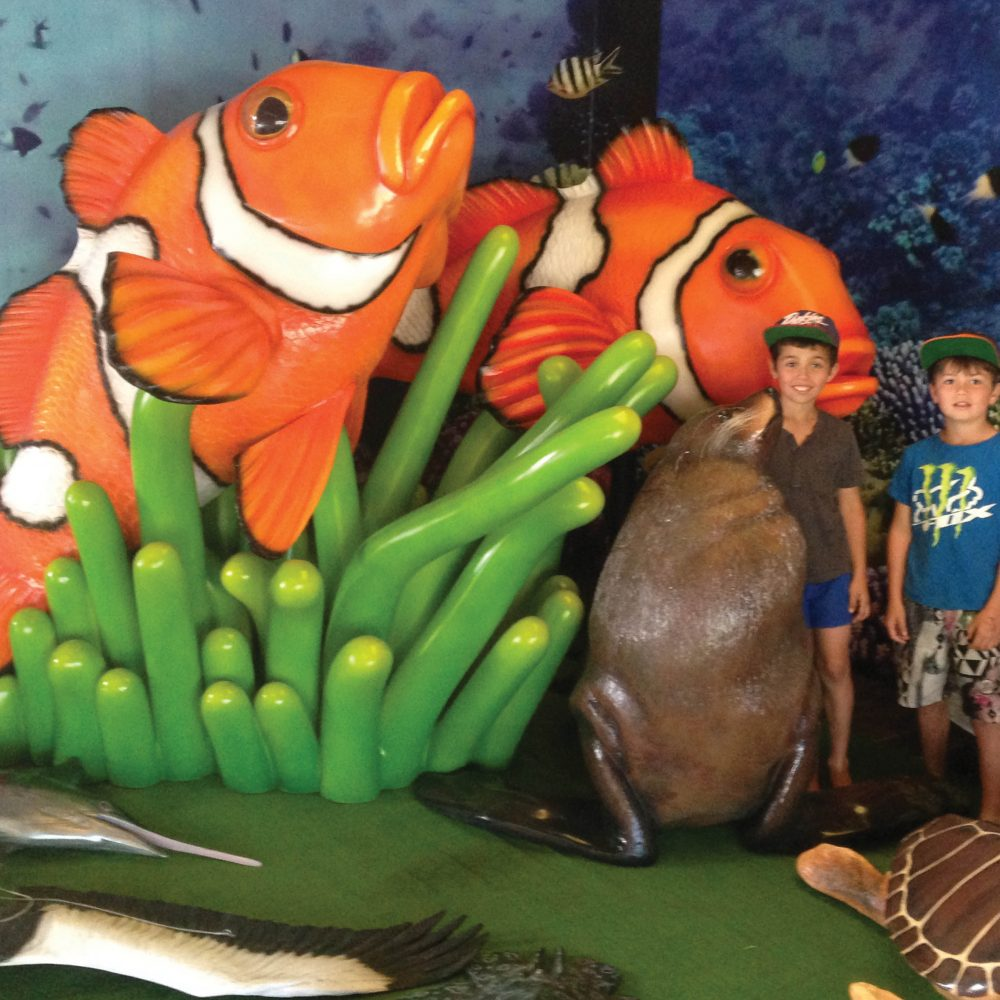 Glown Fish in sea anemone- shown at forster boat shed in display