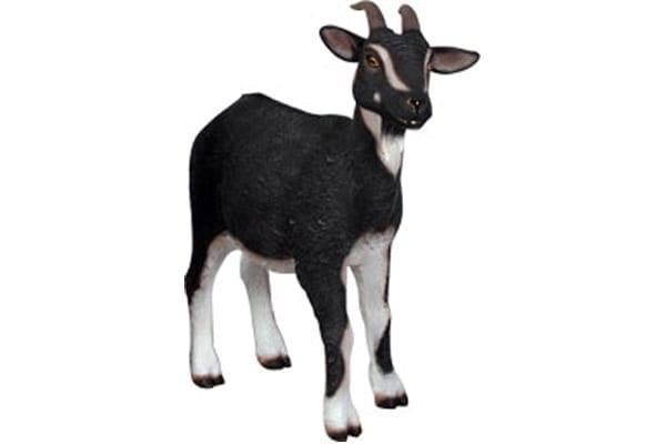 Goat Black  White BW