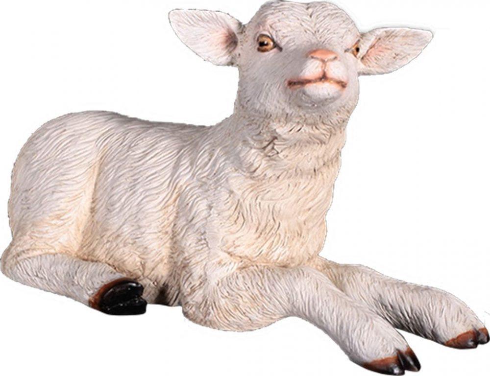 Goat Kid Resting