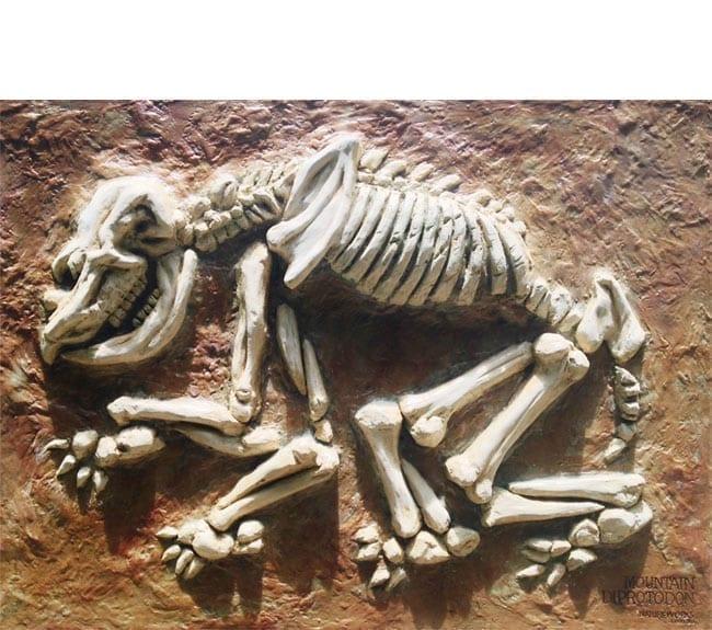 Hulotherium Fossil Dig Diprotodon