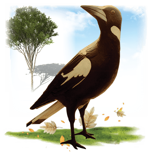 Larger Than Life size Birds Magpie Giant Image